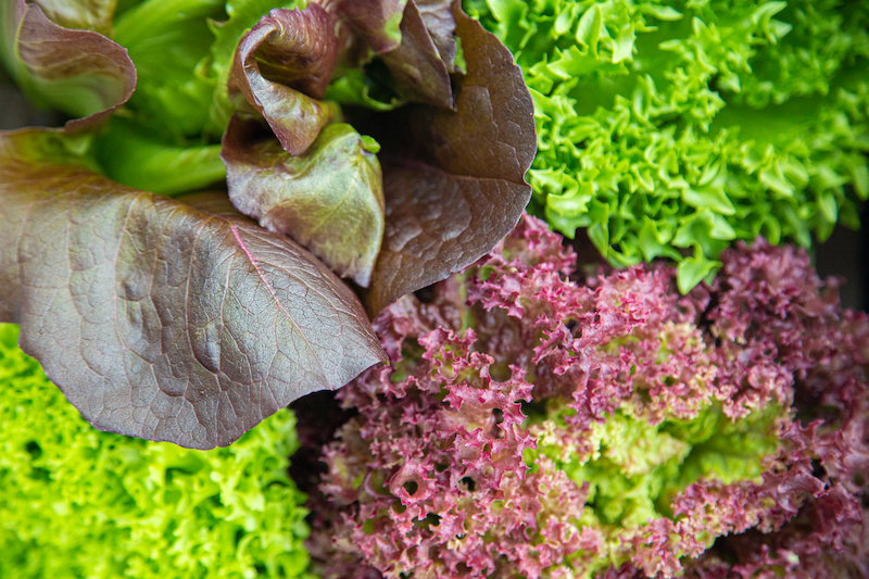 lettuce-gut-health-naturopathic-nutritiion-kent